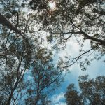 Canopy of Trees by Lyn Holly Coorg; C-Type Fuji Lustre Photographic Paper