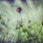 Grasses by Lyn Holly Coorg; C-Type Fuji Lustre Photographic Paper